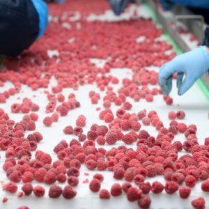 Производство замороженных овощей и ягод - Masfrost