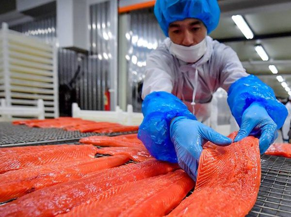 Переработка лосося в Польше - BG PRODUCTION