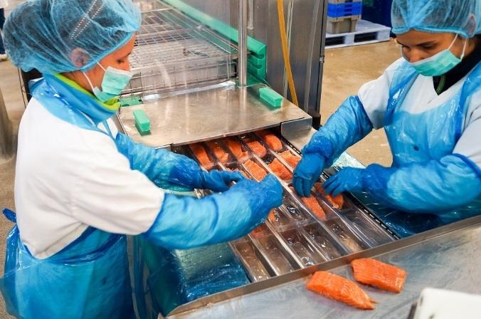 Работник на упаковку рыбы в Польше, ALTA
