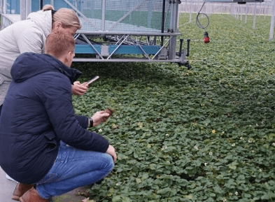 Выращивание мха, FLEVOPLANT